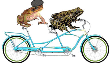 Frog and Toad have adventures